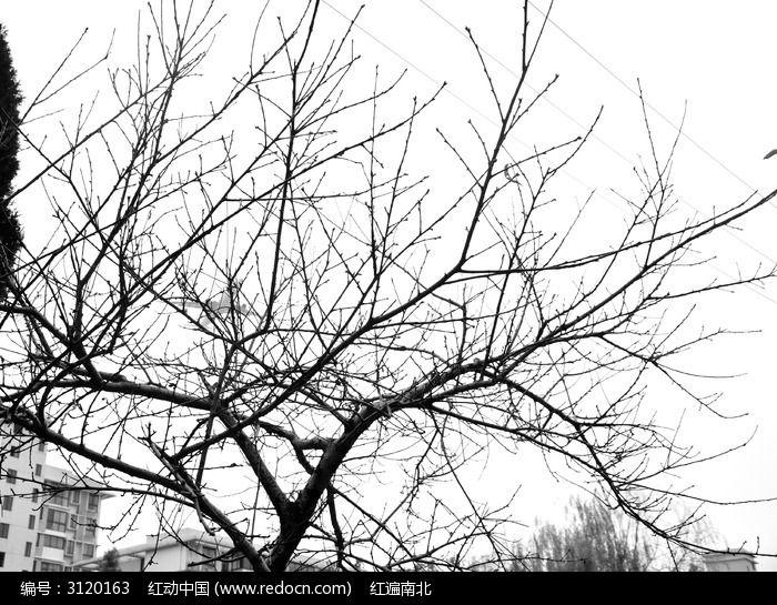 冬季的树枝剪影图片,高清大图_树木枝叶素材