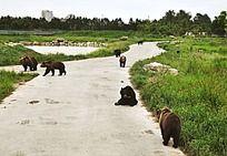 黑熊的家园