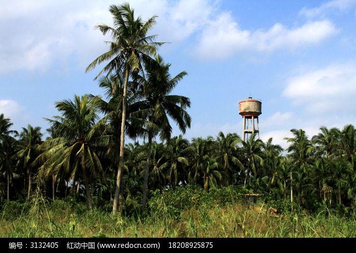蓝天下的椰树林图片_动物植物图片