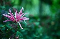 美丽绿色背景上的粉色花朵