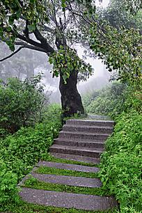 大树下的小路
