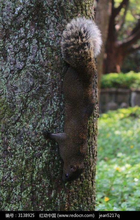 爬树的松鼠图片素材下载(编号:3138925)