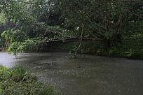 下着大雨的河流