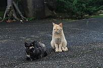 休息的两只猫