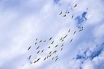 蓝天下的和平鸽