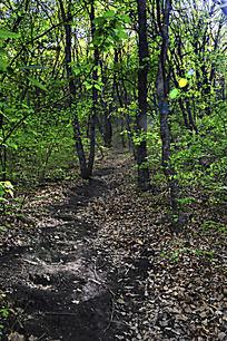崆峒山上茂密的树林