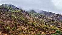 云雾缭绕的山坡