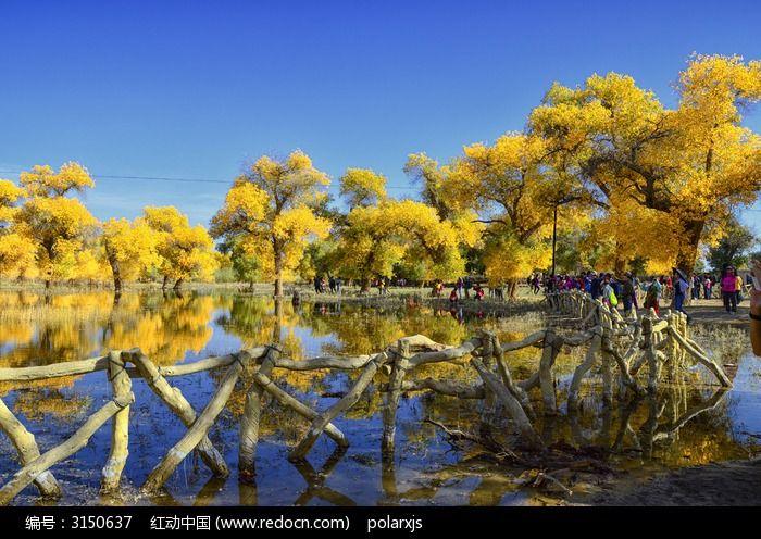 二道桥梦幻的胡杨树倒影图片,高清大图_森林树林素材