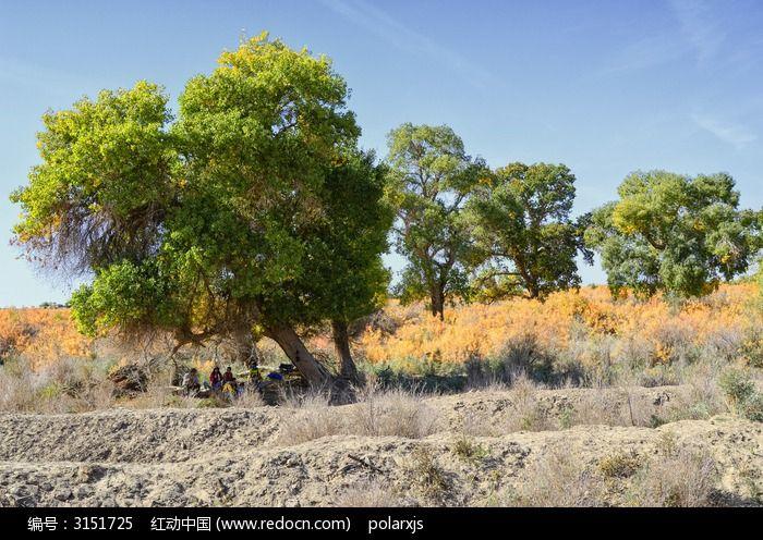 红柳丛中的几棵胡杨树图片,高清大图_森林树林素材