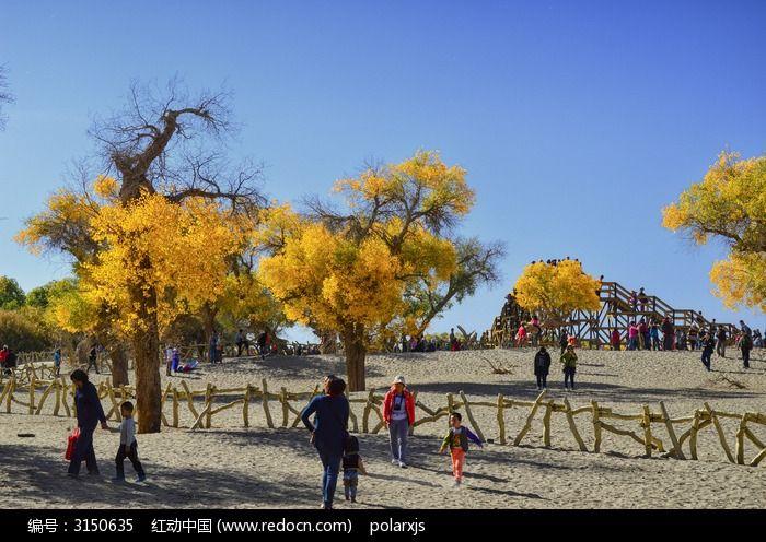 沙地上稀疏的胡杨树图片,高清大图_森林树林素材