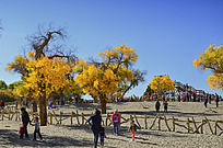 沙地上稀疏的胡杨树