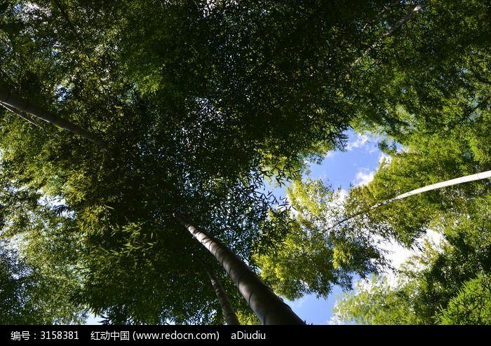 原创摄影图 动物植物 树木枝叶 仰拍竹林与蓝天