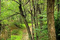 早春山林风景图片