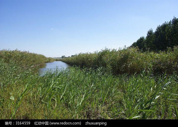 手机 苇塘/盘锦 植物水生植物 芦苇芦花芦苇荡 湿地 苇塘