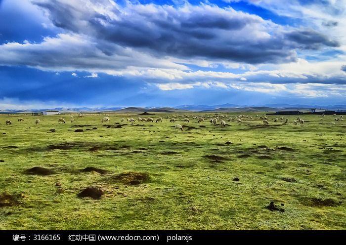 傍晚草原上的 羊群 图片