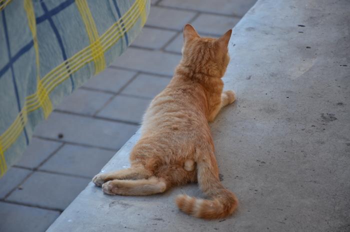 趴在地上的小黄猫背面特写高清图片下载 编号3168207 红动网