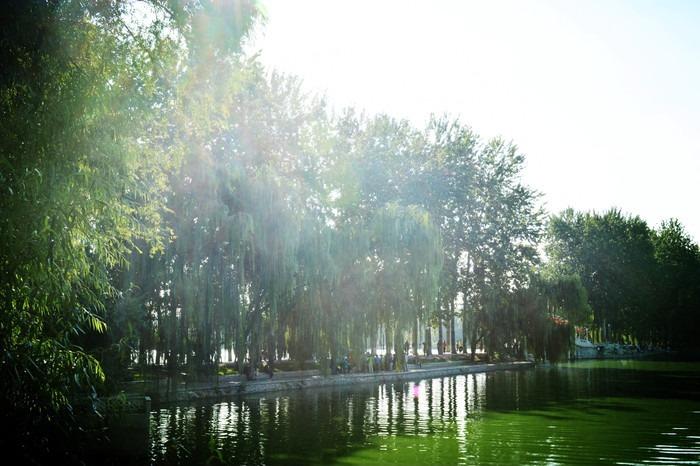 水中树木倒影图片