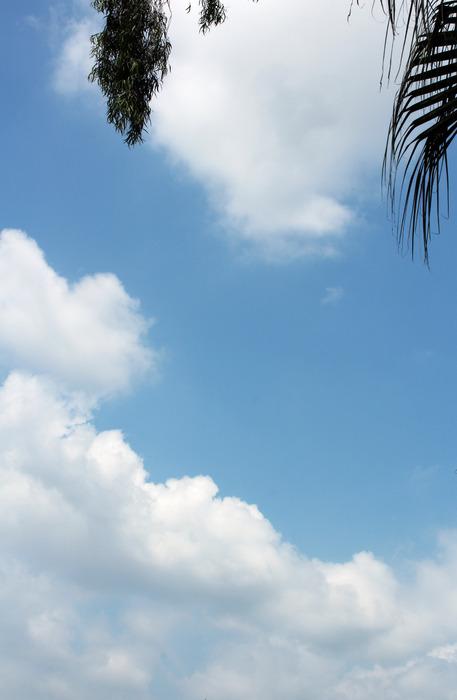 竖看树叶下蓝天中厚厚的白云