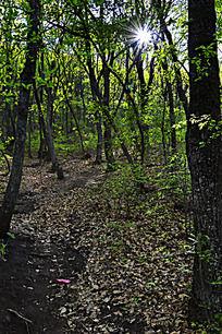 阳光下的茂密树林