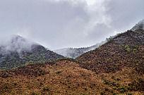 云雾中的黄土山坡