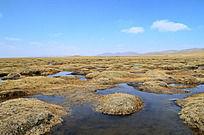 遍布水坑的若尔盖湿地