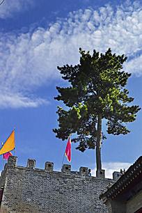 城墙上的一棵松树