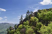 山上茂密的树林