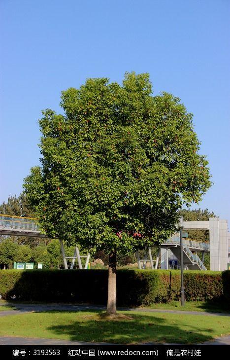 原创摄影图 动物植物 树木枝叶 蓝色的天空和绿色的大树  请您分享