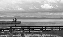 若尔盖草原花湖自拍的美女