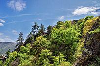 崆峒山山坡上茂密的树林