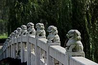 石桥上的一排小狮子雕像