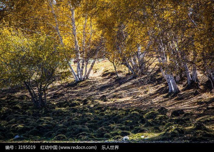 树林和树影图片,高清大图_森林树林素材