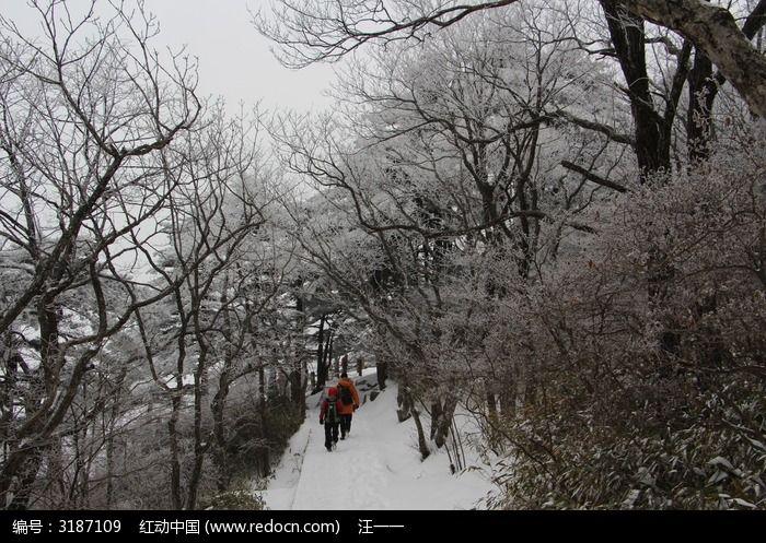 原创摄影图 自然风景 森林树林 雪天的树林  请您分享: 红动网提供