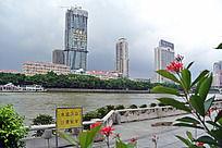 珠江岸边的花和对岸的风景