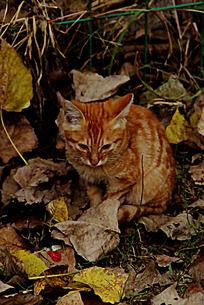 蹲在树叶堆里的黄色小猫
