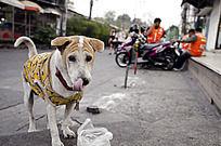街头的流浪狗