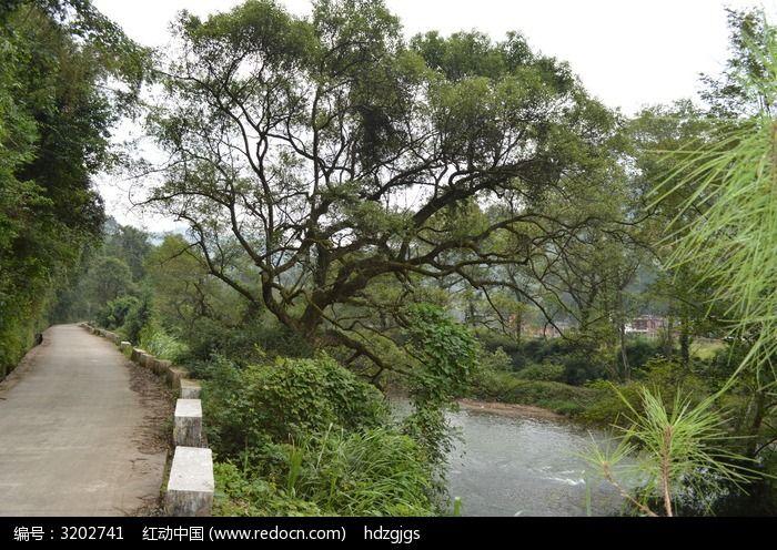 路边弯树图片,高清大图_森林树林素材