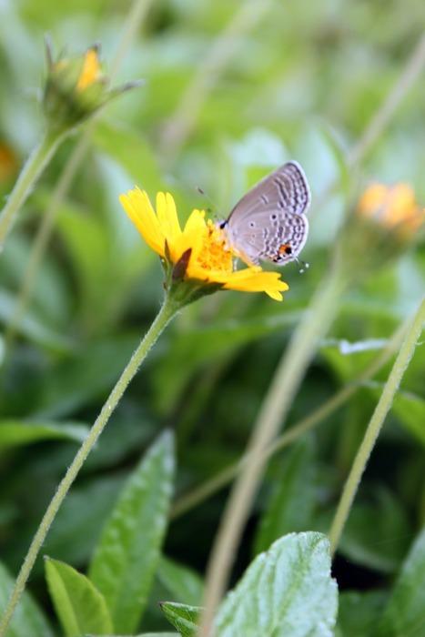 随风飘动的黄花上有只蝴蝶