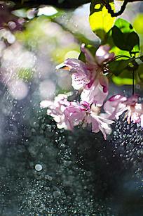 五彩斑斓的樱花