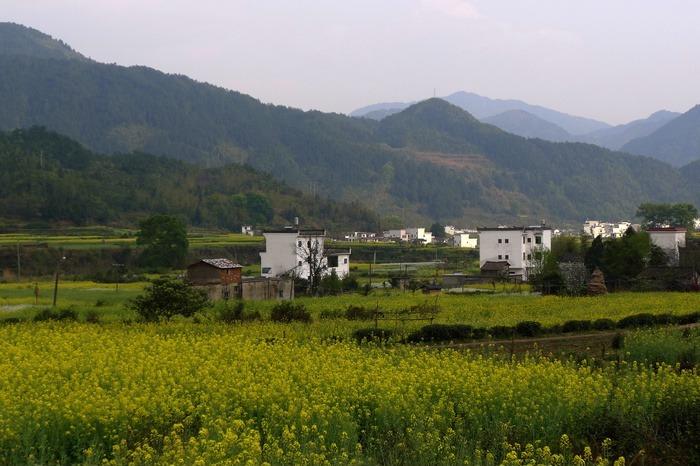 婺源江岭油菜花山谷远景