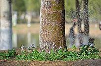 奥林匹克公园路边经过浇灌的树木和野花