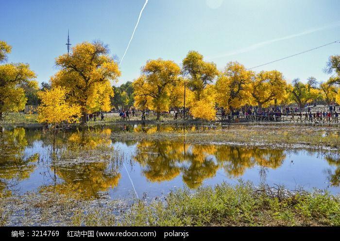 二道桥胡杨树倒影图片,高清大图_森林树林素材