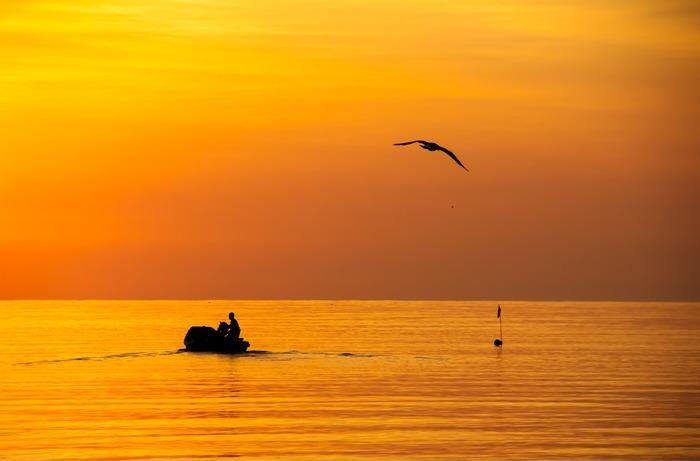 清晨海鸥伴渔船出海打渔图片