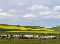 草原和云彩