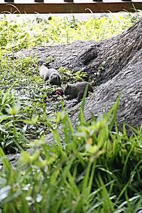 普陀山风景 松鼠 动物 自然风景 摄影图片 草丛