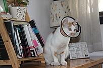 宠物保护套-伊丽沙白圈-治疗套防护罩猫狗美容罩防咬圈