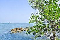 海边绿色的树
