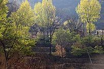 绿色中的村庄