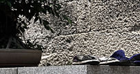 普陀山风景 布鞋 生活摄影