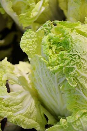 青绿色的白菜
